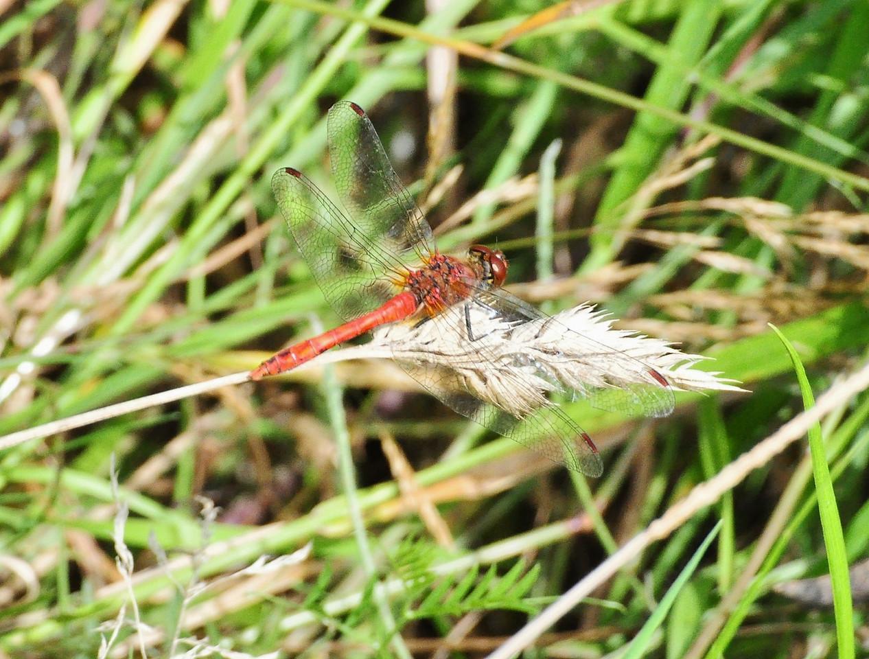 Otmoor 2013