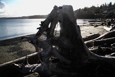 Driftwood Shores 24