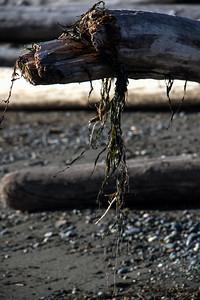 Driftwood Shores 23