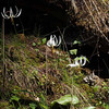 There were hundreds of fawn lilies.