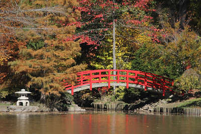 Bridge at the Asian Gardens