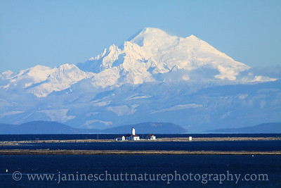 Dungeness Lighthouse backdropped by Mt. Baker on a crisp winter day.  Photo taken from the viewpoint on the trail leading to the Dungeness Spit at Dungeness National Wildlife Refuge in Washington.