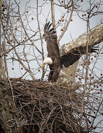 Nesting Parents