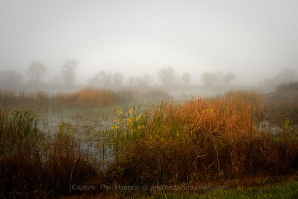Foggy Wetlands