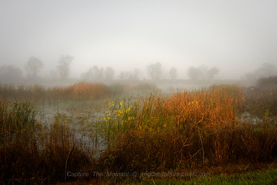 Foggy Wetlands