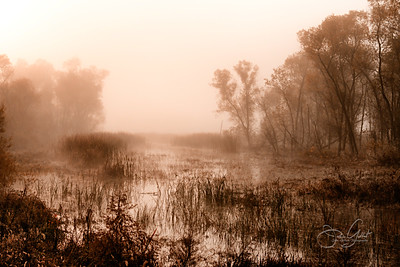Foggy Wetlands II