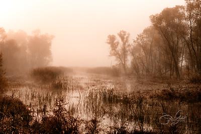 Foggy Wetlands II