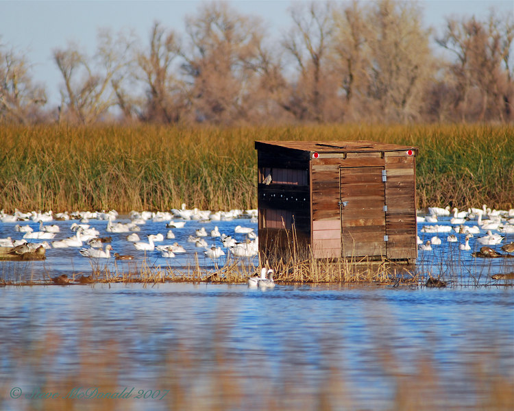 Sacramento National Wildlife Refuge Photography Blind