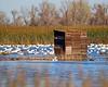 Sacramento National Wildlife Refuge Photography Blind