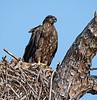 Melbourne, FL BE27 Eagle Nest