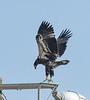 Location - Satellite Beach BE994 Eagle Nest