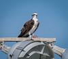 Location - Near Osprey Nesting Area In Satellite Beach