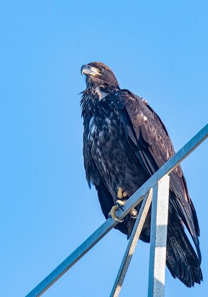 Location - Bald Eagle BE994 Nest Area In Satellite Beach