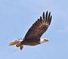 • Prairie Lake Road Eagle's Nest<br /> • Bald Eagle in flight with a fish in its talon