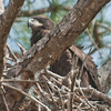 • Prairie Lake Road Eagle's Nest<br /> • Different views of the Eaglet