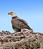 • Prairie Lake Road Eagle's Nest<br /> • She's keeping an eye on us