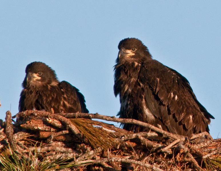 We're getting hungry. Mom, when are you coming back to the nest with some food ?