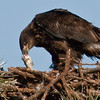 Eaglet - That really taste great