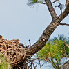 Eaglet - It looks pretty good from this branch