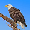 Palm Bay Eagle's Nest - An enhanced photo with a added blue sky