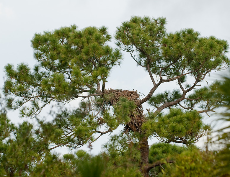 Palm Bay Eagle's Nest - View of the nest from a distance