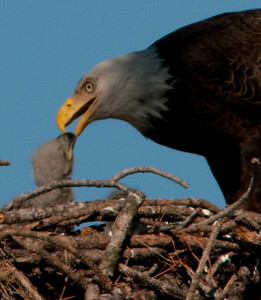 How about that for beak to beak?