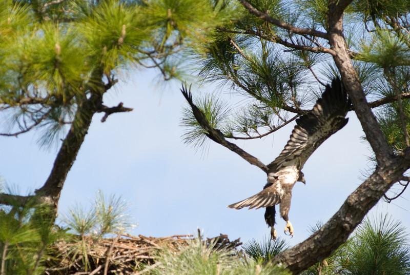 Palm Bay Eagle's Nest - Off I go again