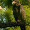 Palm Bay Eagle's Nest