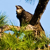 Palm Bay Eagle's Nest - Big Yawn