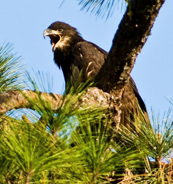 Palm Bay Eagle's Nest - Big Yawn