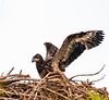 Location - Melbourne Eagle Nest