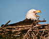 I guess the Eagle had something to say.