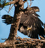 • Melbourne Eagle's Nest<br /> • Yes, The wings are working.