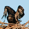 • Palm Bay Eagle's Nest<br /> • Yes, I'm starting to see how my wings work