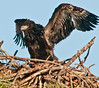 • Palm Bay Eagle's Nest<br /> • These wings really extend far