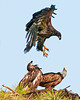 Watch out where you are going to land.  Those talons of yours look pretty sharp.
