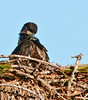 Palm Bay Eagle's Nest - It's time for some pruning!
