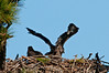 Palm Bay Eagle's Nest - Watch where you're flipping those wings