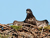 Palm Bay Eagle's Nest - Just spreading my wings