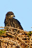 Palm Bay Eagle's Nest - Just hanging around
