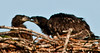 Palm Bay Eagle's Nest - How about a kiss?