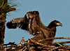 Palm Bay Eagle's Nest - Now it's time to stretch your winds