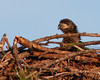 Palm Bay Eagle's Nest - Just hanging out after a long morning