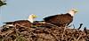 Palm Bay Eagle's Nest - Eyes forward