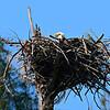 Jewish Eagle Nest