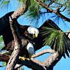 Harriett/M-15 nest