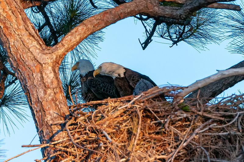 Cape Coral Eagles