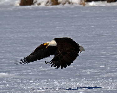 Eagles March 2010