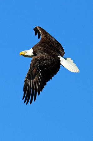 Eagles  Spring  2014