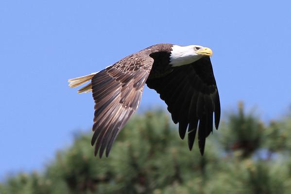 NBG Eagles - 2010 Season